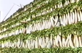 1970 昭和47年 鹿児島特産の干し大根を生かした「漬物」の製造開始